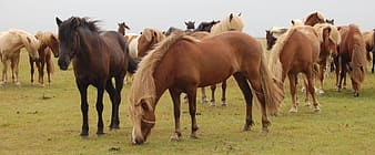 Brown horses during daytime photo