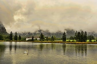White swan on lake near green trees under white clouds during daytime