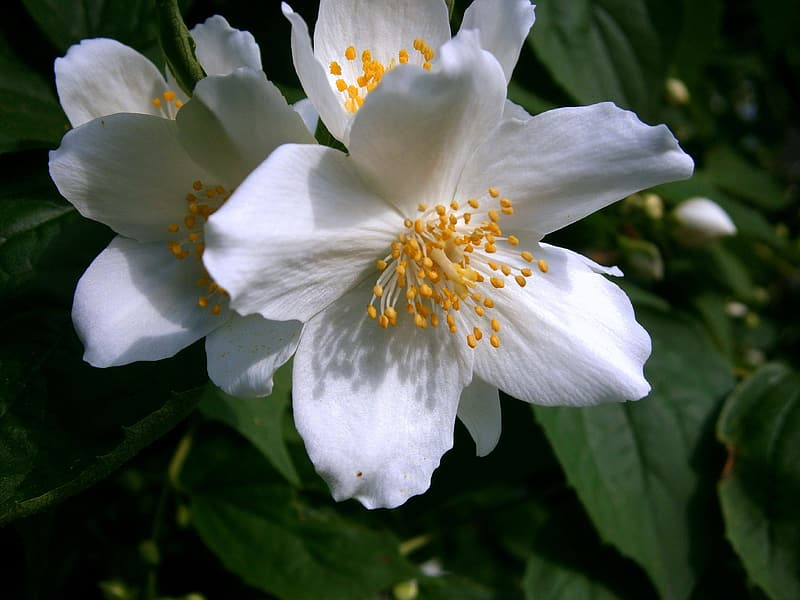 Selective focus photography of white anemone flower in bloom