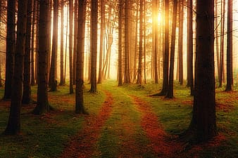 Brown forest with golden hour rays