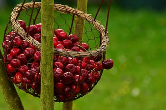Selective focus photo of basket of red cherries
