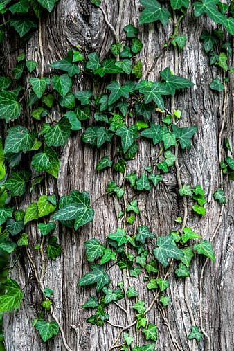 Green leaves in gray tree trunk