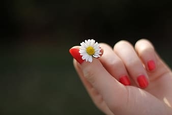 Person holding daisy flower