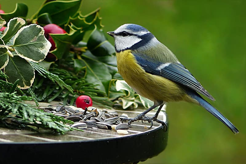 Shallow focus photography of yellow and blue bird perched on table