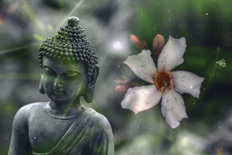 Gray Buddha beside white adenium close up photo