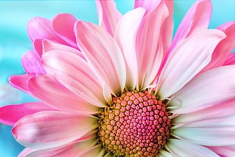 Yellow and pink flower decor, close-up photography of pink flower
