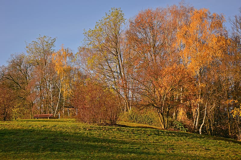 Brown trees on green grass field during daytime