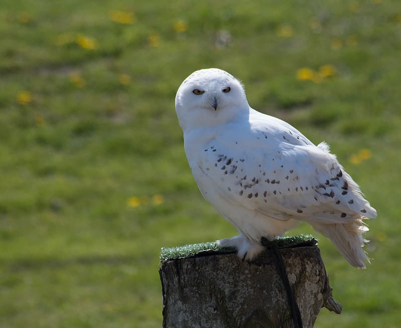 Selective focus photography of white and black barn owl perching on tree stomp