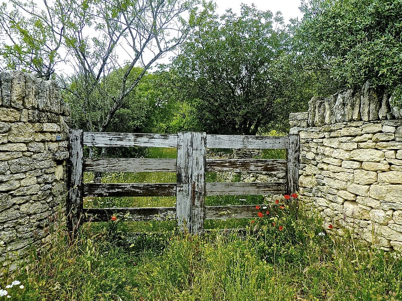 Gray wooden gate with green grass at daytime