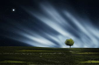 Lone tree under the moon digital wallpaper