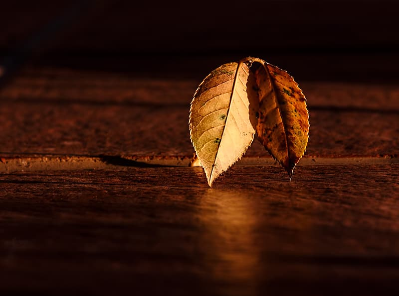 Selective focus photo of two brown leaves