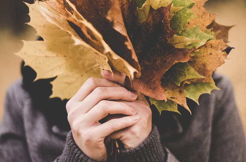 Person in gray sweater holding green and brown leaves