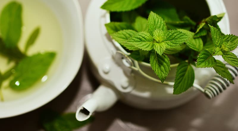 Selective focus photography of green leaf plant in white teapot