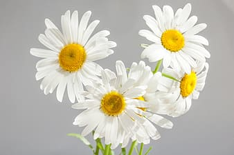 White petaled flowers