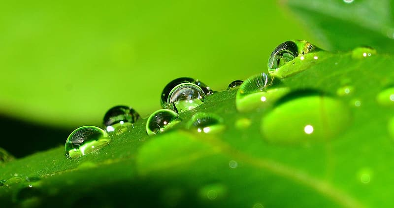 Macro photography of drop of water on green leaf
