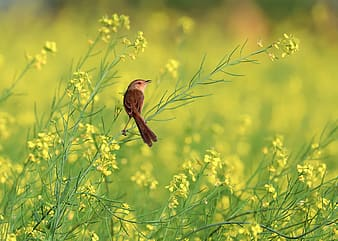 Selective focus photography brown and black bird on green leaf yellow petal flower plant