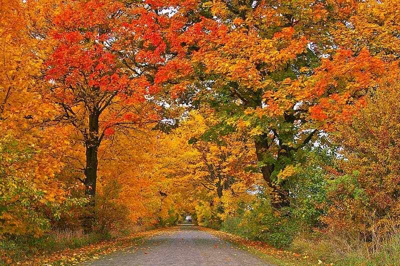 Road between brown leaf trees