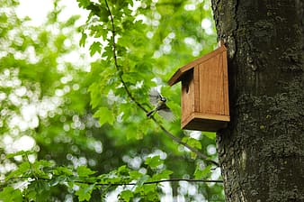 Green and white bird flying near brown wooden birdhouse