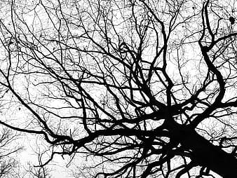 Low-angled photography of withered tree