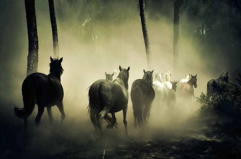Black and white horse painting