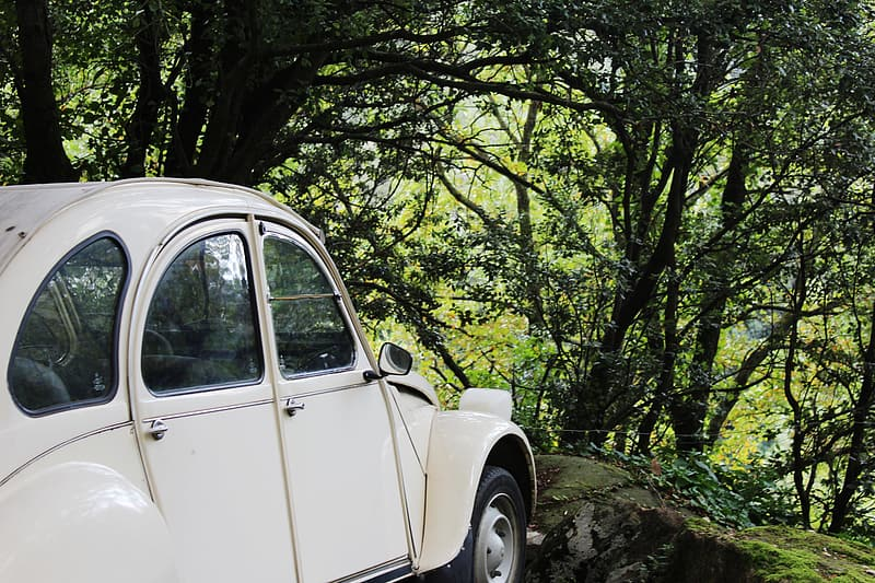 White Volkswagen Beetle coupe parked near trees