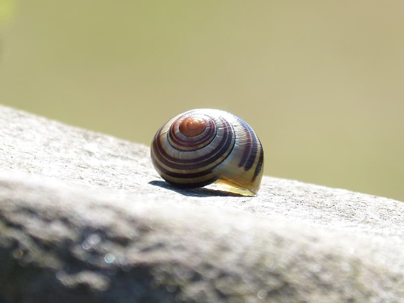 Brown and black snail on gray concrete surface