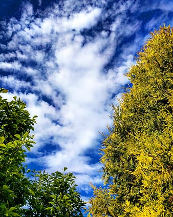 Low-angle photography of green leaf trees under white and blue sky