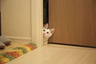 Photo of white and black cat on door