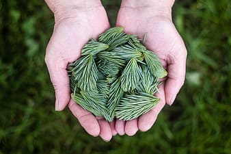 Person holding green weeds