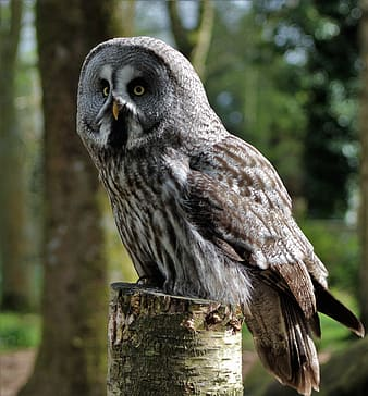 Gray and brown owl on top of wood trunk