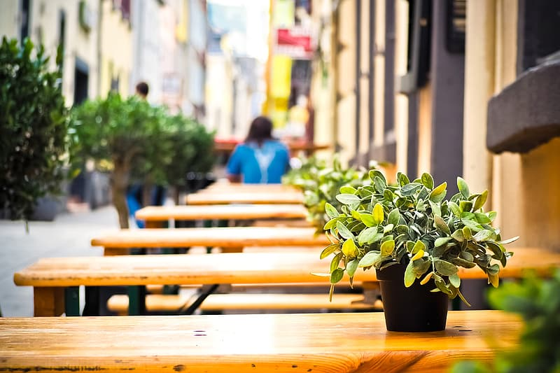 Empty wooden tables with plant on top outdoor