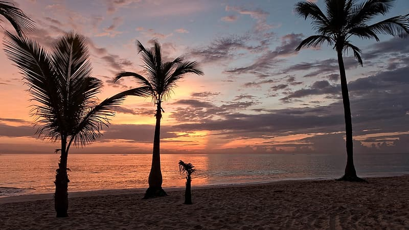 Silhouette photo of palm trees near sea under white clouds at golden hour