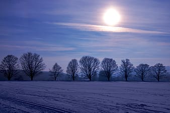 Leafless trees on snow covered ground during daytime