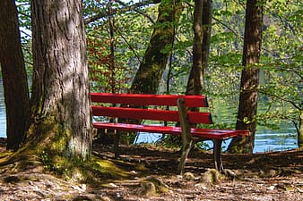 Red wooden bench beside a tree outdoor