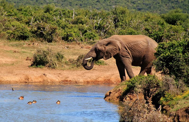 Elephant on body of water