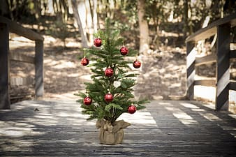 Green Christmas tree with red baubles on gray wooden bridge at daytime