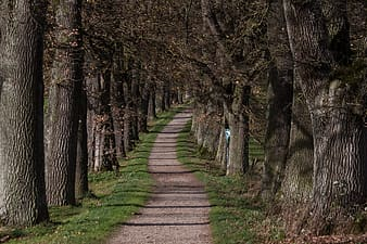 Photo of forest trail