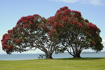 Photo of red petaled flower tree near bench