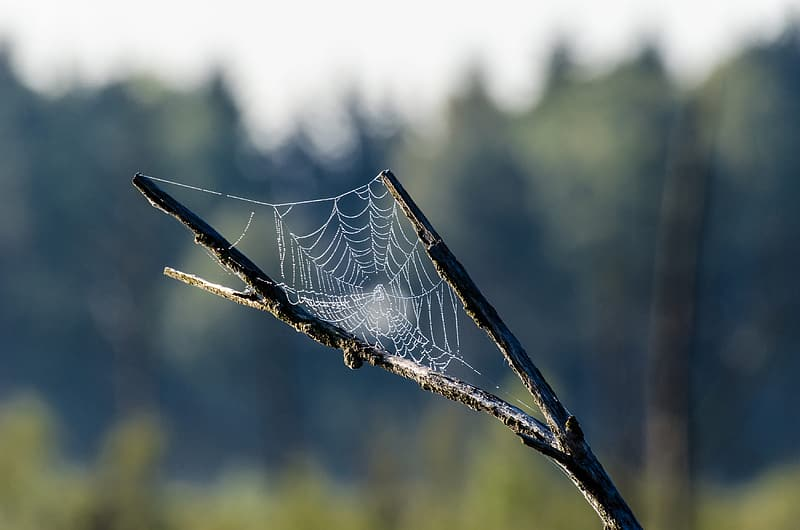 Selective focus photography of spider web on tree branch