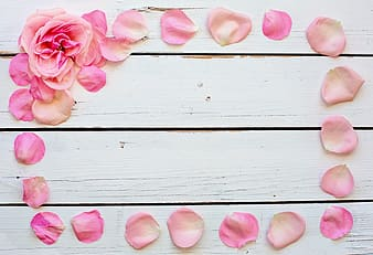 White and pink rose petal on wooden surface
