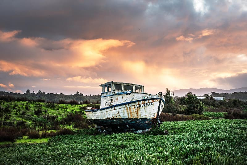 White and black boat on grass during day