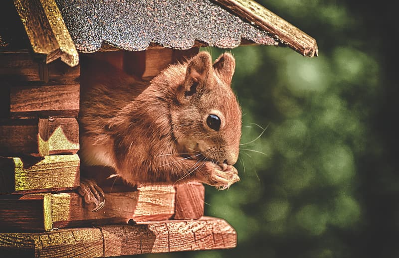 Brown squirrel on brown wooden post
