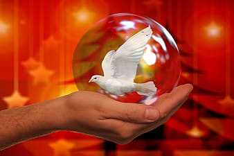 White dove in glass ball on hand