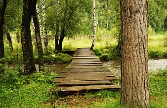 Brown wooden pathway near body of water surrounded trees