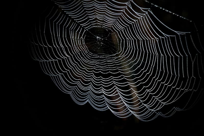 White spider web in closeup photography