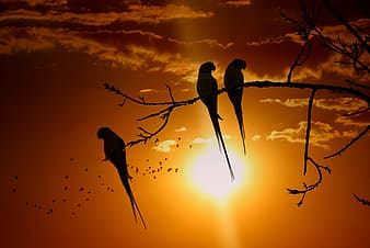 Silhouette of birds on tree branch during sunset