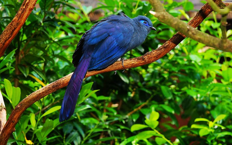 Photo of blue feathered bird on tree brunch