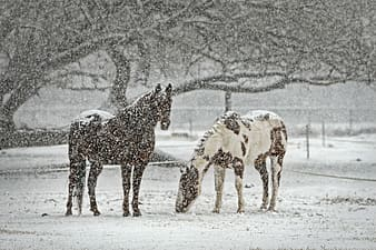 Landscape photography of black and brown and white horses during winter