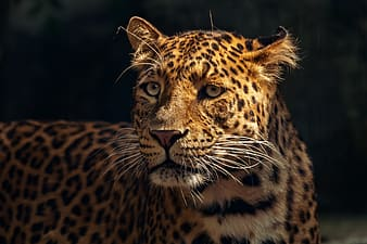 Selective focus photo of leopard