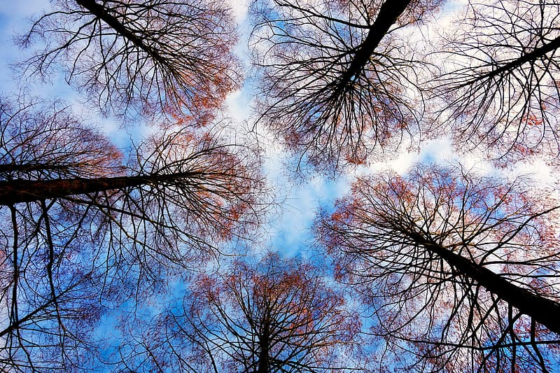 Brown leafed trees in low angle photography